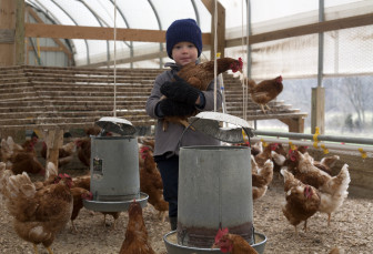 Four-year-old Marcus Miller holds one of his father's chickens at the family farm in Campbell Hill, Ill.