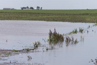 Water standing in fields after a strong thunderstorm near Fairmont, IL on Tuesday, July 1, 2014.