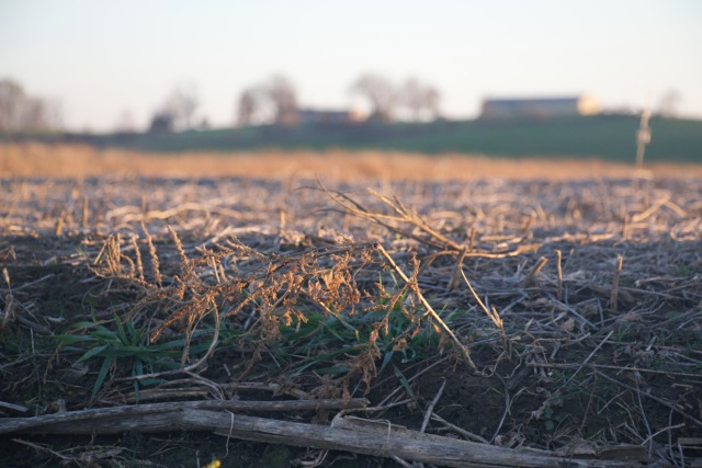 Farmland near Marengo, Iowa, has a layer of crop residue protecting the topsoil. Photo taken Nov. 9, 2015.